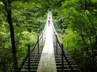 吊り橋 効果